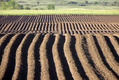 Una corretta gestione dei campi potrebbe diminuire i cambiamenti climatici.