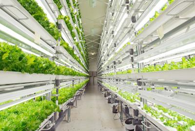 Fujitsu ha inaugurato un impianto futuristico e iper-tecnologico per la coltivazione della lattuga.