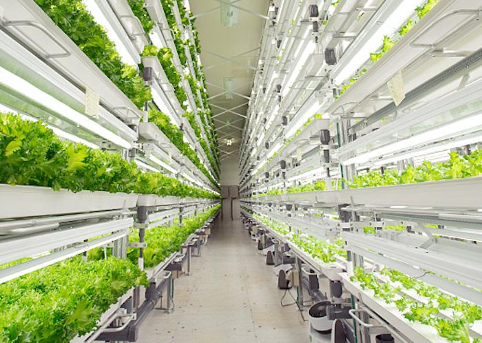 Fujitsu ha da poco inaugurato un impianto iper-tecnologico per la coltivazione della lattuga.