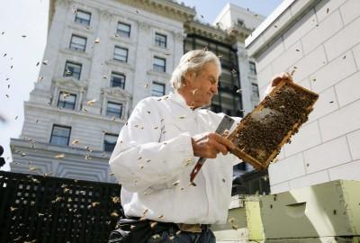 Migliaia di api vivono sul tetto del Clift Hotel di San Francisco.