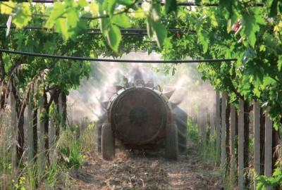 Il quaderno di campagna permette di registrare i trattamenti fitosanitari.