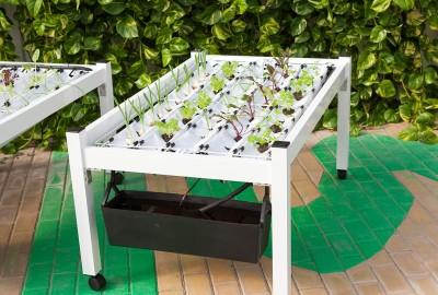 Con MiniCamp è possibile sperimentare la coltivazione idroponica direttamente a casa.