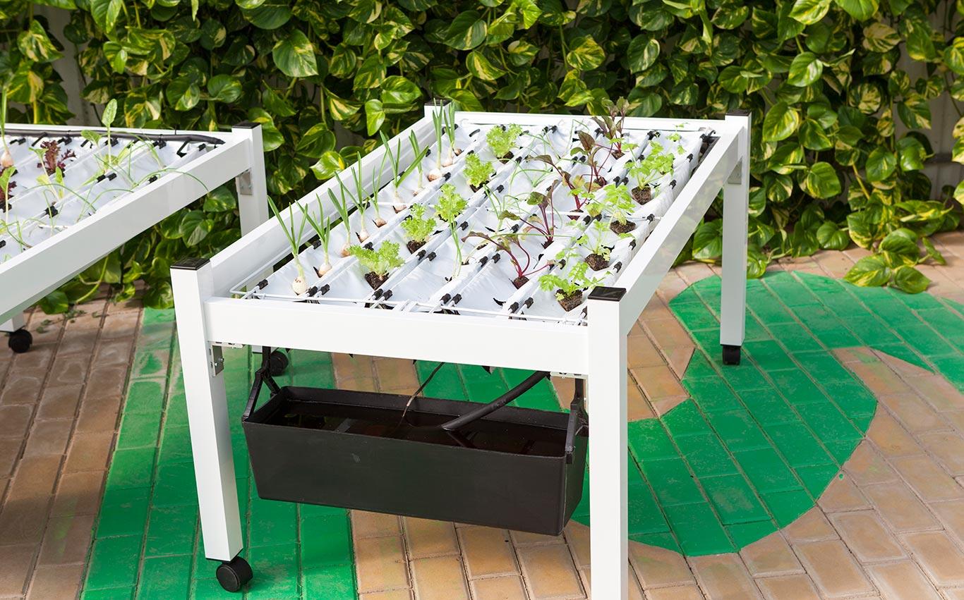 Con MiniCamp è possibile sperimentare i vantaggi della coltivazione idroponica direttamente a casa.