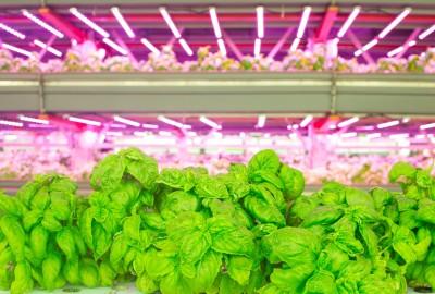 Il problema principale dell'agricoltura verticale risiede nella forte impronta carbonica.