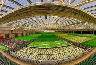 La fattoria del futuro è a Tel Aviv.