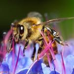 Con il quaderno di campagna è sempre più diffuso l'uso di feromoni al posto dei pesticidi.