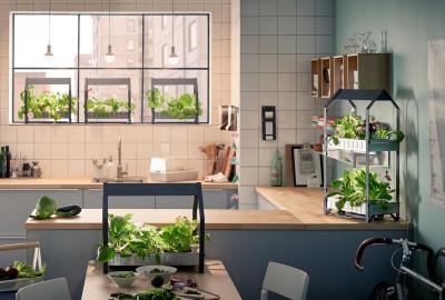 Ikea è pronta a lanciare sul mercato una nuova serie di prodotti per la coltivazione idroponica.