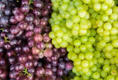 La Puglia è regione leader nella produzione di uva da tavola.